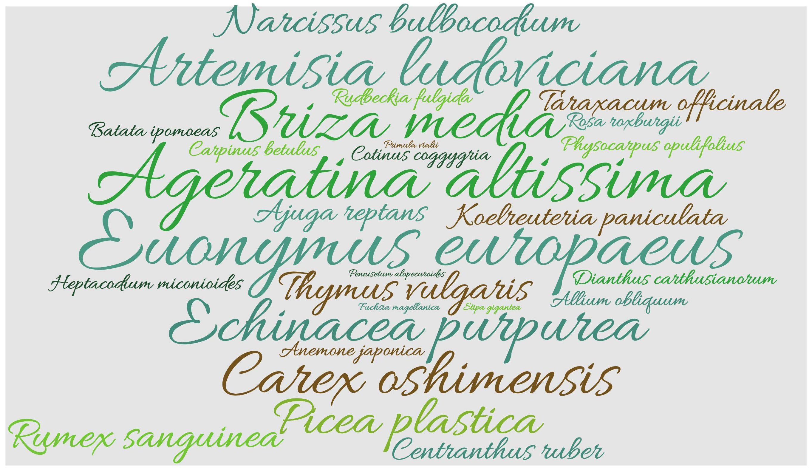 Wortwolke botanische Namen